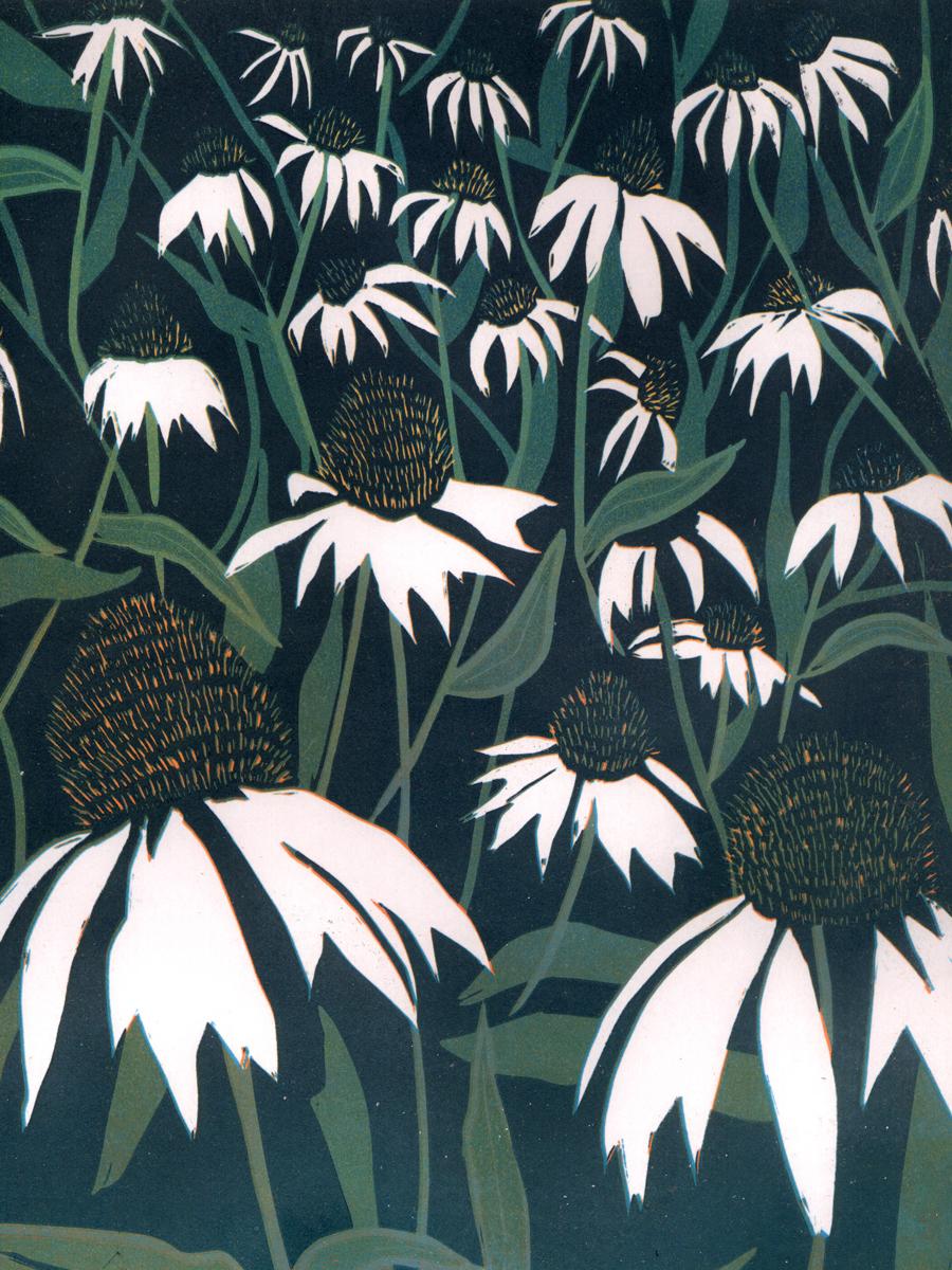 Amanda Taylor Kew Echinacea print