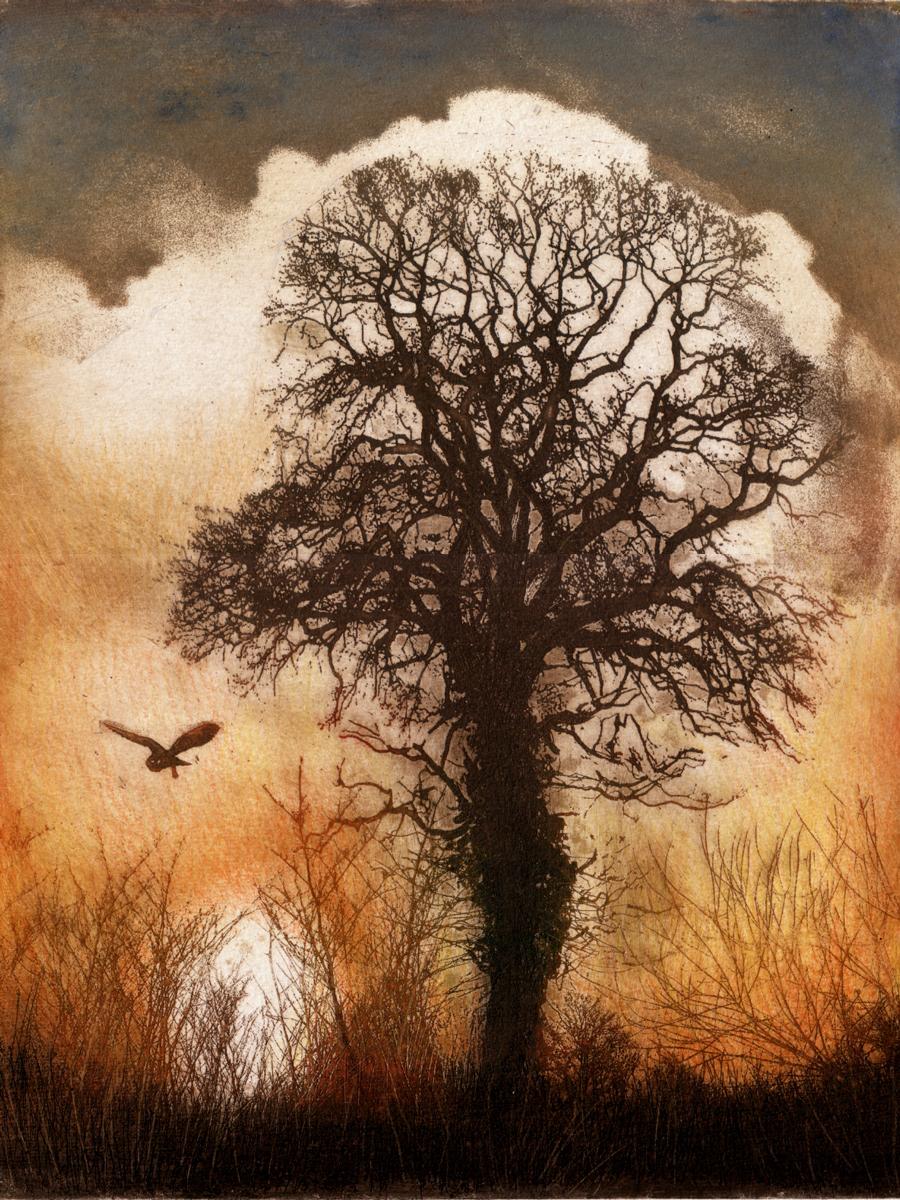 """Ian McCulloch print called """"Barn Owl"""""""
