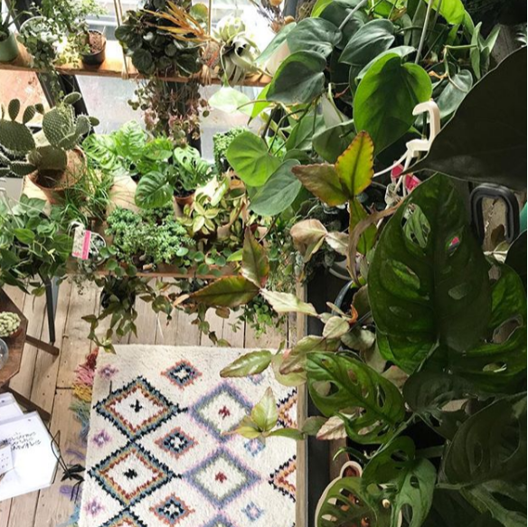 Botanic Tribe pop up plant and macramé shop